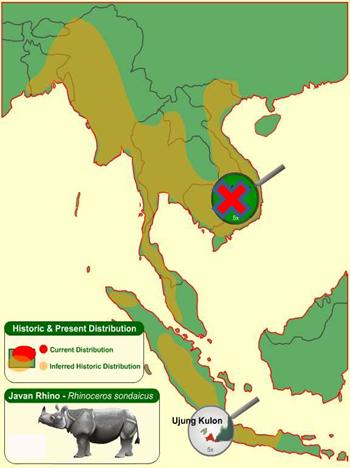 Badak Jawa-Persebaran