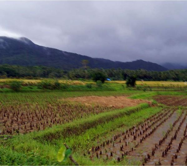 Foto diambil di Ujung Kulon.
