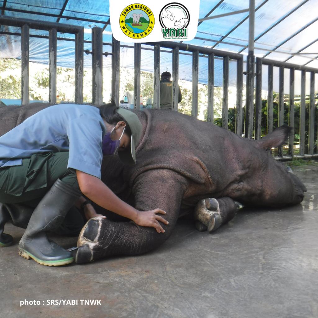 Badak Sumatera-21032020 (3)