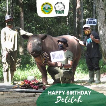 Sumatran Rhino-Delilah